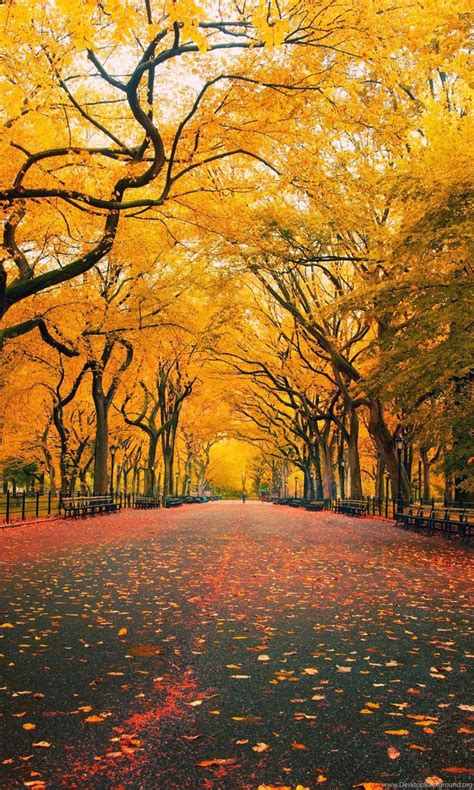 Autumn Themed Wallpapers For Android by Late Autumn Desktop Themes Hd Wallpapers Widescreen