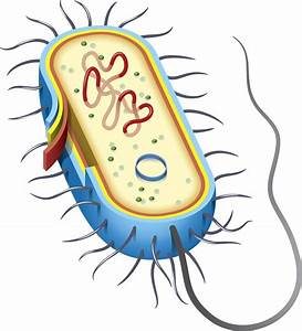 Different Types Of Bacteria