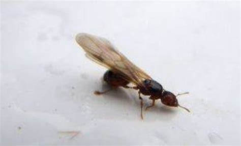 How To Get Rid Of Flying Termites  Hunker. Charles K Post Addiction Treatment Center. How To Start A Llc In Texas Windows San Jose. Online School For Human Resources. Hormonal Imbalance Acne Lifelock Vs Trustedid. Mygreatlakes Com Student Loans. University Of Phoenix Student Log On. Mortgage Broker Net Branch Dentist In Joliet. Whats A Good Cheap Internet Service