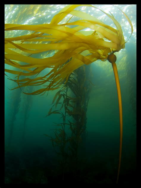 underwater photographer joe platkos gallery diving