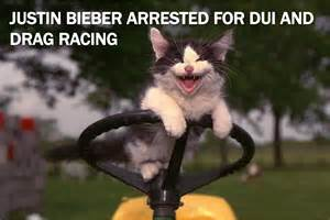 cat cing current event cat of the day justin bieber busted