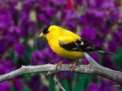 Bird Wallpapers Birds Desktop Pretty Animals Animal