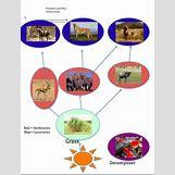 Grassland Energy Pyramid | 448 x 588 png 173kB