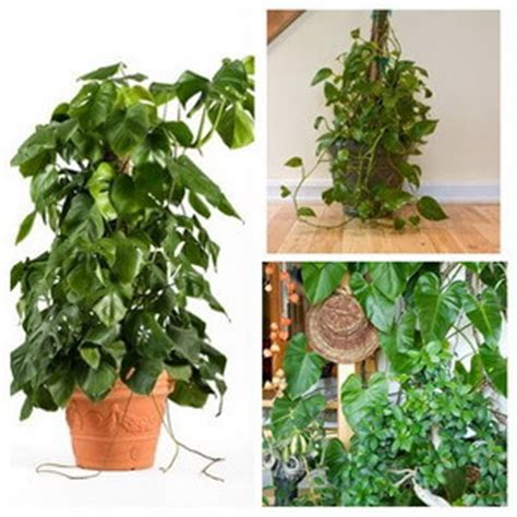 House Plant Types  Categories Of Indoor Plants