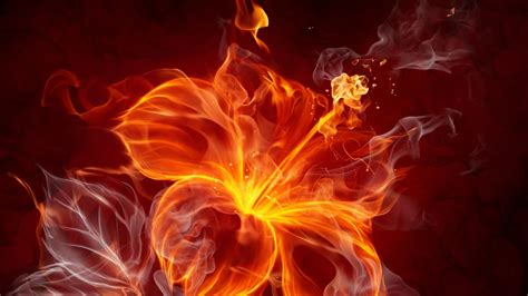 Fire Flowers Wallpapers Hd