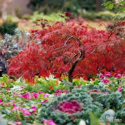 different types of japanese maples 18 excellent japanese maples