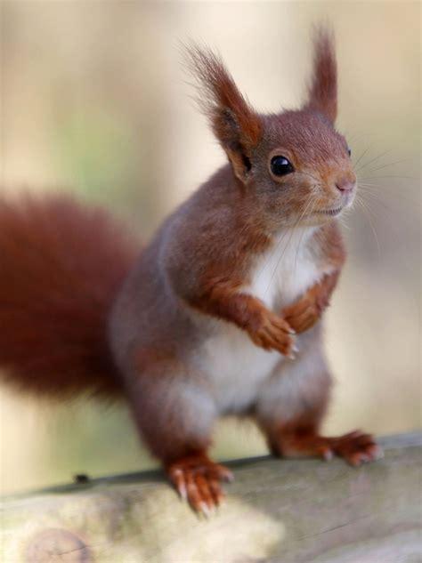 This Cute Squirrel Is A Thief