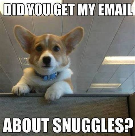 Corgi Puppy Meme - corgi snuggles funny animals pinterest pug meme search and pug