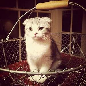 Meredith Grey Swift. omg, this cat