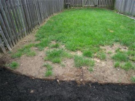 grass  grow   heat  summer seed