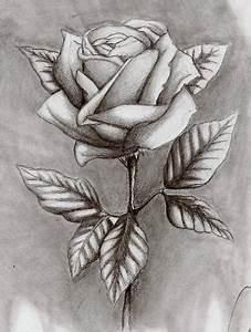 Schöne Muster Zum Selber Malen : wie zeichnet man eine sch ne detaillerte rose zeichnen rosen ~ Orissabook.com Haus und Dekorationen