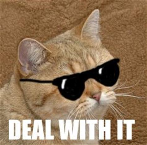Deal With It Meme - cybergata starecat a k a graficscat working its way to becoming a new cat meme