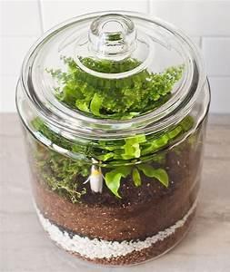 Terrarium Plante Deco : how to make a closed terrarium plants terrarium ~ Dode.kayakingforconservation.com Idées de Décoration
