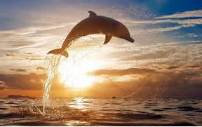 Dolphin Pictures - All...