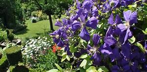 Plantes Grimpantes Mur : jardin d 39 hubert ~ Melissatoandfro.com Idées de Décoration