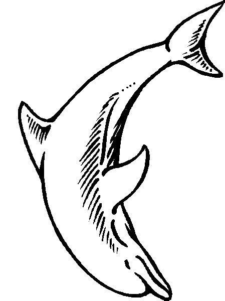 Dolfijn Kleurplaat Printen by Dolfijnen Kleurplaat Dieren Kleurplaat 187 Animaatjes Nl