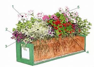Blumenkasten 120 Cm Lang Kunststoff : blumenkasten mit verschiedenen pelargonien pflanzanleitung ~ Bigdaddyawards.com Haus und Dekorationen