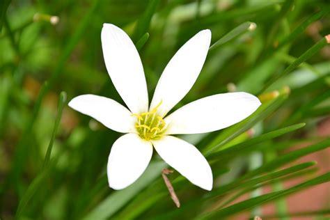 ภาพดอกไม้สีขาว พื้นสีเขียว