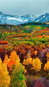 Wallpaper, Autumn, Forest, Mountain, 5k, Nature, 16242