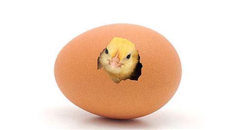 mewarnai gambar telur ayam menetas