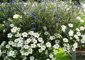 Balkonkästen Bepflanzen Beispiele : balkonkasten bepflanzen beispiele 14 calibrachoa ~ Lizthompson.info Haus und Dekorationen