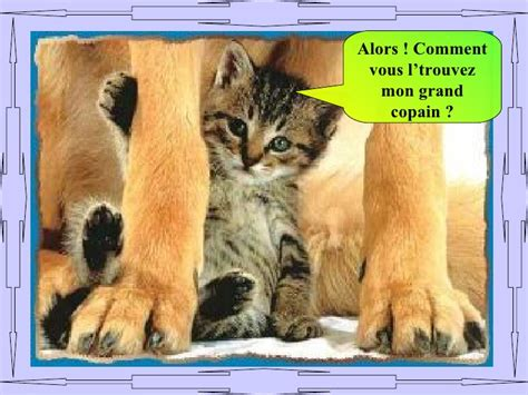 Animaux Drole Image Animaux Droles