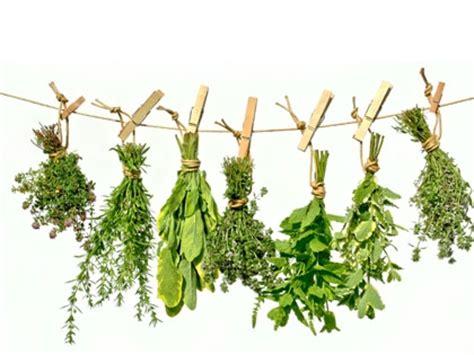 plantes aromatiques cuisine les plantes aromatiques du jardin de la source