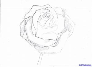 How To Draw Realistic Rose Step By Pencil Drawing - Litle Pups