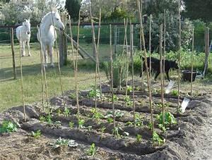 Arrosage Des Tomates : journ e de la tomate p cheur de lune ~ Carolinahurricanesstore.com Idées de Décoration