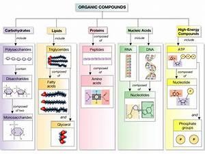 Mrs  Mioducki U0026 39 S Website    Unit 3  Biochemistry