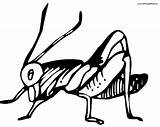 Cricket Coloring Insect Printable Getcoloringpages Game sketch template