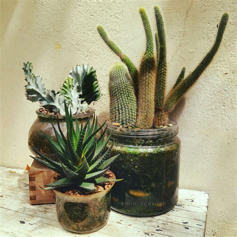 Succulents / Cactus / hawortia | ดอกไม้