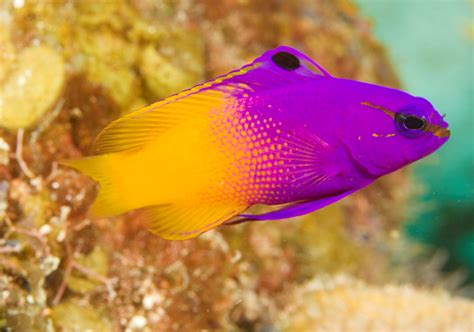 saltwater fish top 5 starter marine fish