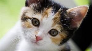 Il Vaccino del Gatto Casa Del Cane e del Gatto