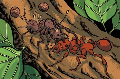 zombie ants fungus takes facts brains