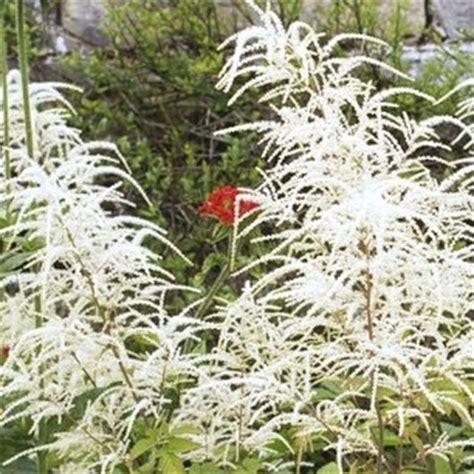 plante d ombre exterieur vivace plante vivace d ombre liste ooreka