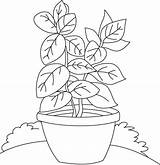 Pages Coloring Basil Herbs Vase Plant Colouring Herb Shrubs Drawing Spices Printable Template Getdrawings Called Sketch Picolour Results sketch template