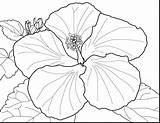 Zinnia Coloring Pages Flower Getcolorings Printable sketch template