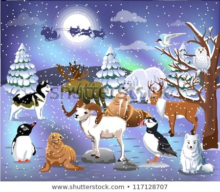 arctic fox cartoon stock images royalty  images
