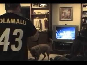 Steelers Fans reaction to Super Bowl XLIII win - YouTube