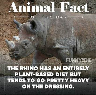 Facts Funny Animal Pee Might