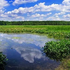 Wetlands Ecosystem  U2014 Steemit