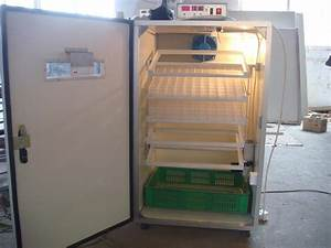 Buy Incubator Chicken Eggs In India