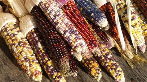 corn history hagokiku71 مطالب آبان 1394
