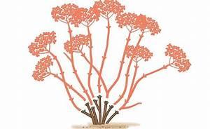 Wann Schneidet Man Hortensien Zurück : die 25 besten ideen zu hortensien garten auf pinterest hortensien beschneiden hortensien und ~ Eleganceandgraceweddings.com Haus und Dekorationen