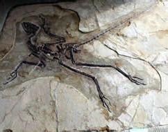 colorado dinosaur fossil smuggler sentenced  wyoming ice