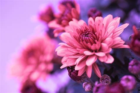 Garten Herbst Zurückschneiden by Herbst Im Garten Die Sch 246 Nheit In Der Natur Will Kein