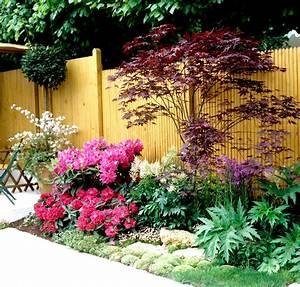 Plante Pour Jardin Japonais : rable du japon planter et tailler ooreka ~ Dode.kayakingforconservation.com Idées de Décoration