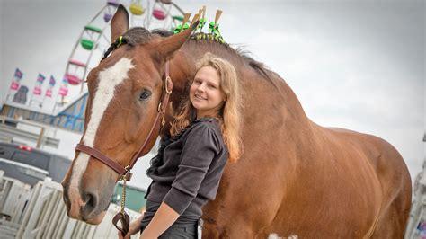 horses minnesota state fair