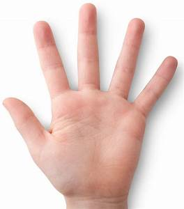 Hand study reveals brain's distorted body model